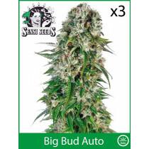 Sensi Seeds Big Bud (Auto) (3 Pcs)