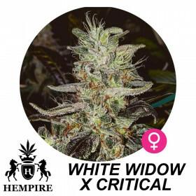Hempire Seeds White Widow X Critical  5 Pcs (Fem)