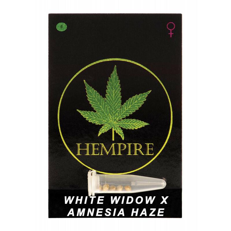 Hempire Seeds White Widow X Amnesia Haze 5 Pcs (Fem)