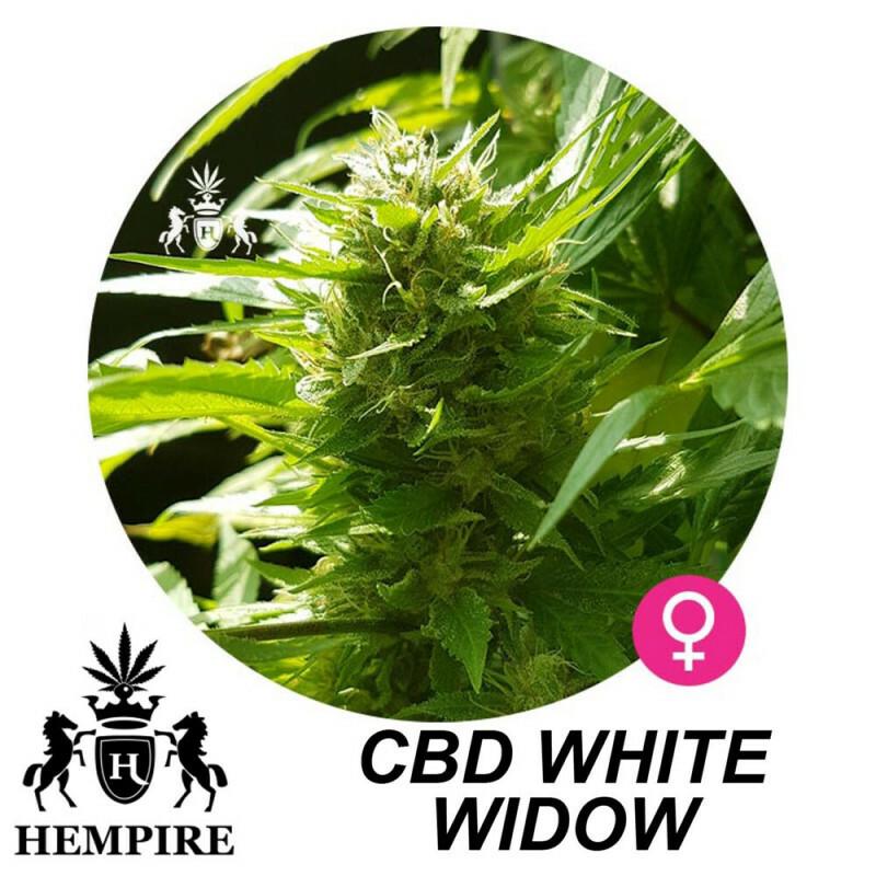 Hempire Seeds Cbd White Widow  13%Thc - 7%Cbd 5 Pcs (Fem)