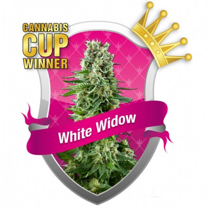R.Q.S. White Widow (5 Pcs.)