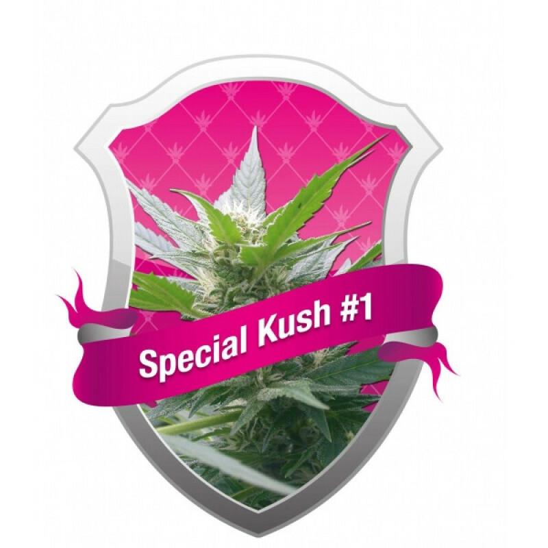 R.Q.S. Special Kush No. 1 ( 3 Pcs. )