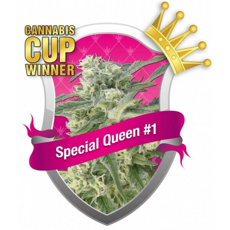 R.Q.S. Special Queen No. 1 ( 1 Pcs. )