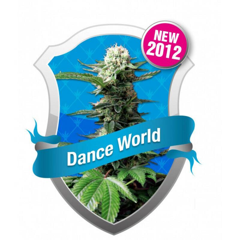 R.Q.S. Dance World (Fem)(1 Pcs)