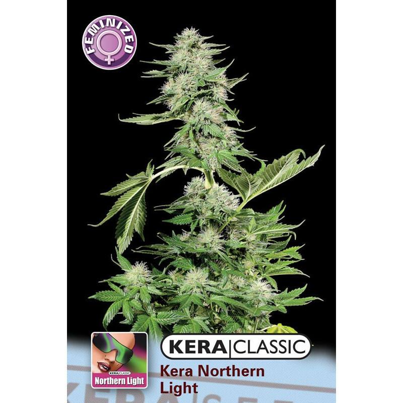 Kera Seeds Northern Light 3 Pcs (Fem)