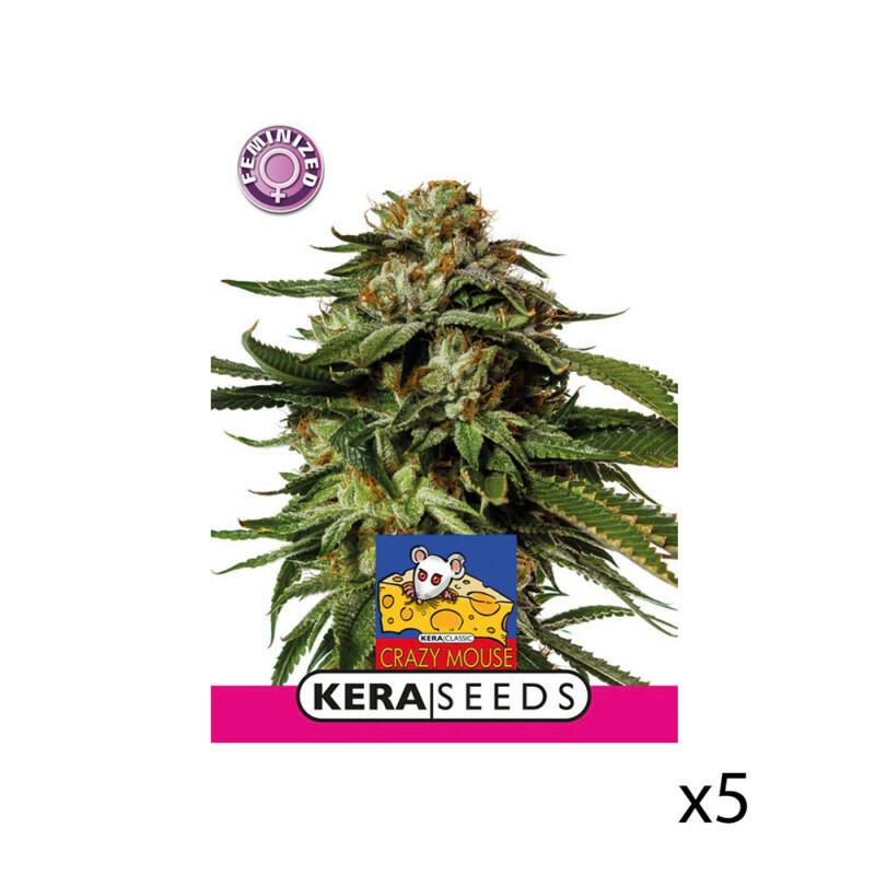 Kera Seeds Amsterdam Cheese 5 Pcs (Fem)