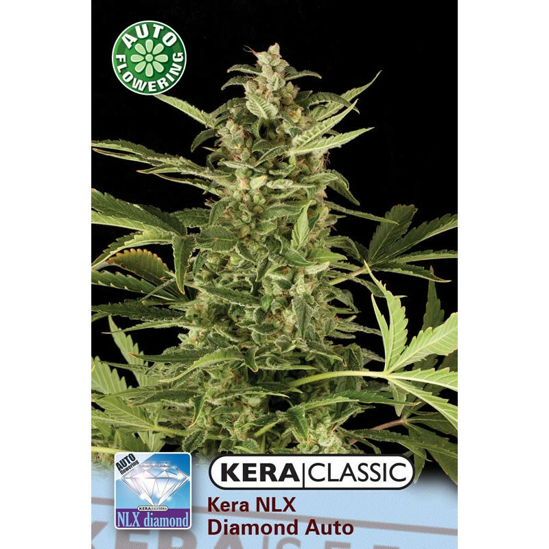 Kera Seeds Nlx Diamond 5 Pcs (Auto)