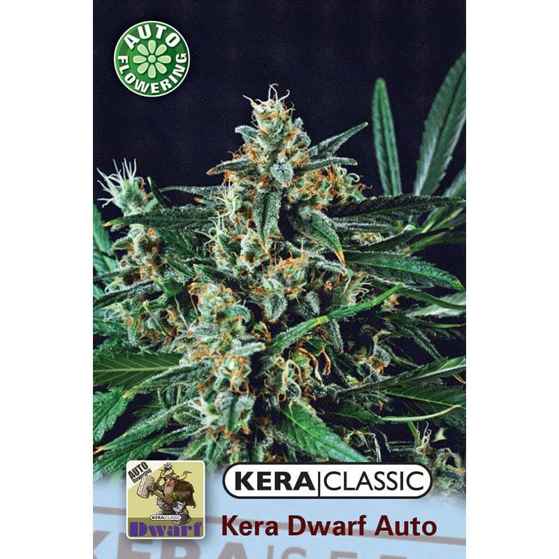 Kera Seeds Kera Dwarf 5 Pcs (Auto)