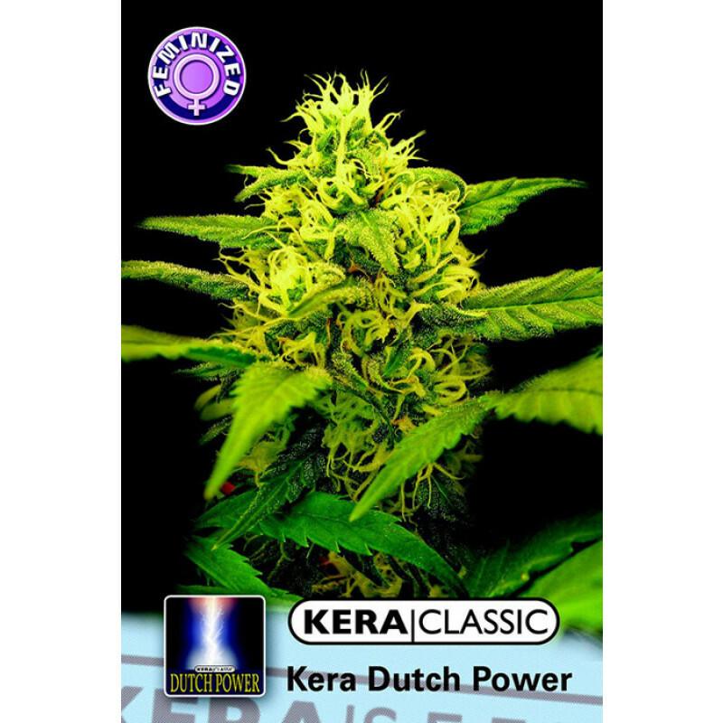 Kera Seeds Dutch Power 10 Pcs (Fem)