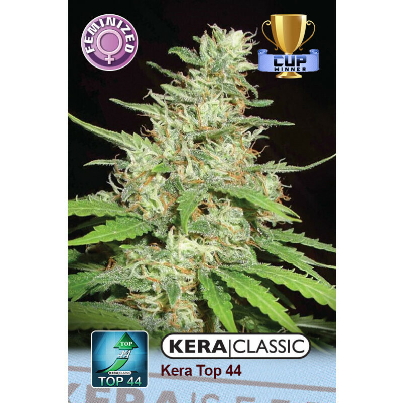 Kera Seeds Top 44 3 Pcs (Fem)