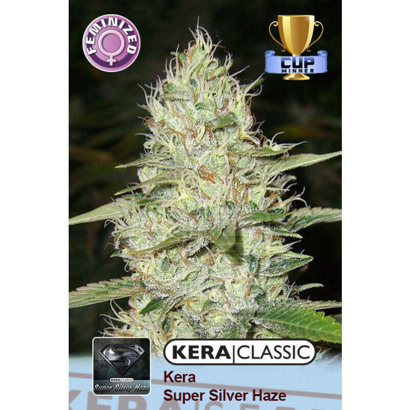 Kera Seeds Super Silver Haze 3 Pcs (Fem)