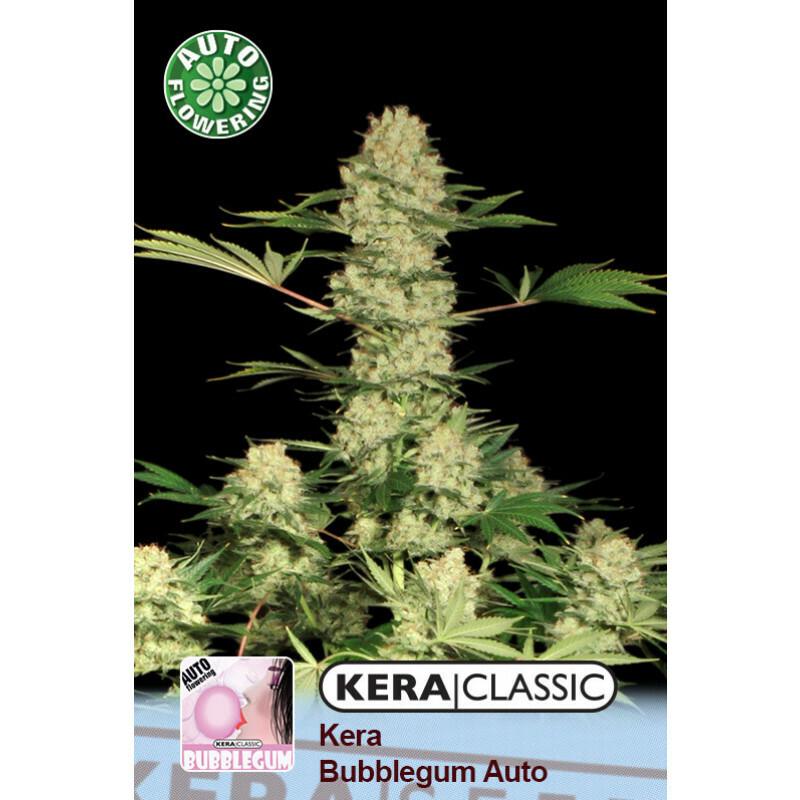 Kera Seeds Bubblegum 10 Pcs (Auto)