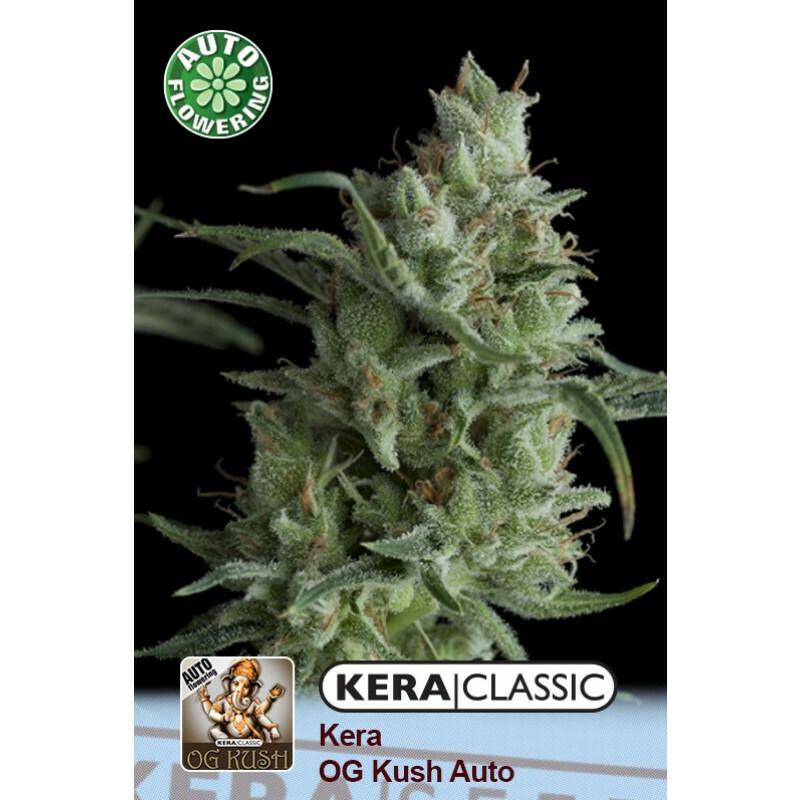Kera Seeds Og Kush 10 Pcs (Auto)