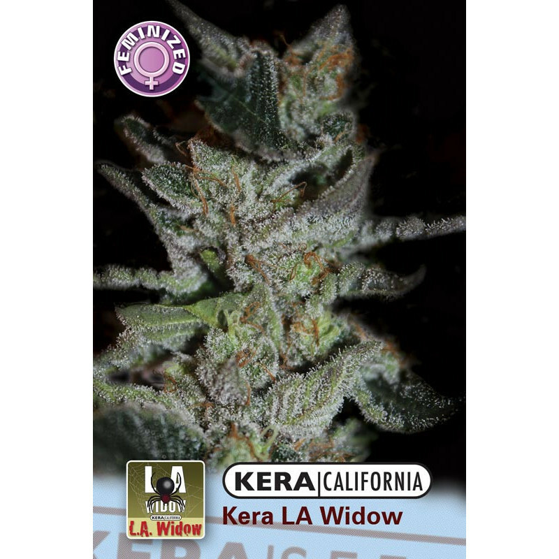 Kera California La Widow 10 Pcs (Fem)