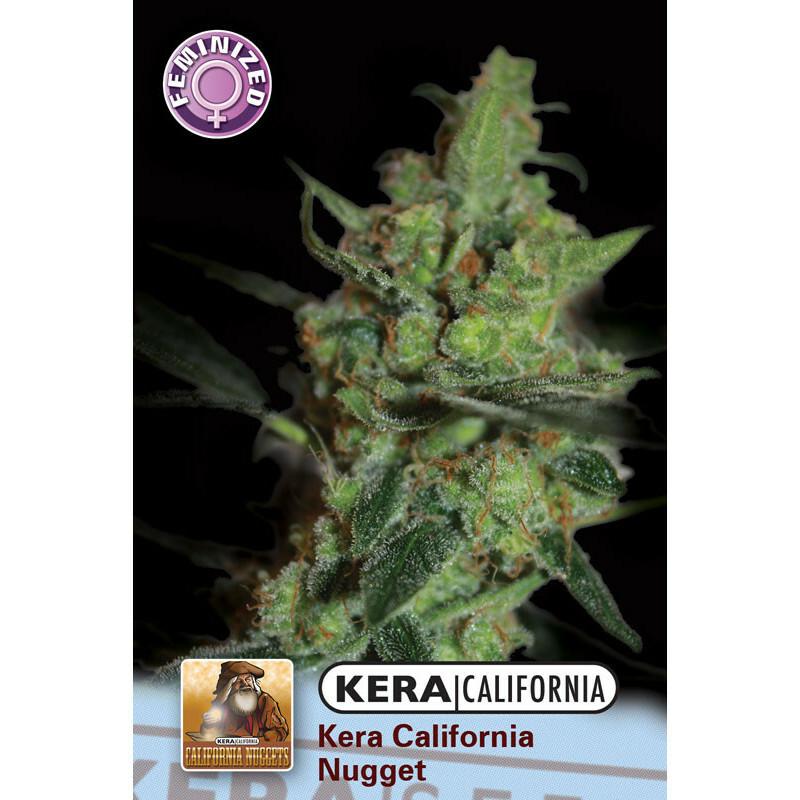 Kera California Nugget 10 Pcs (Fem)