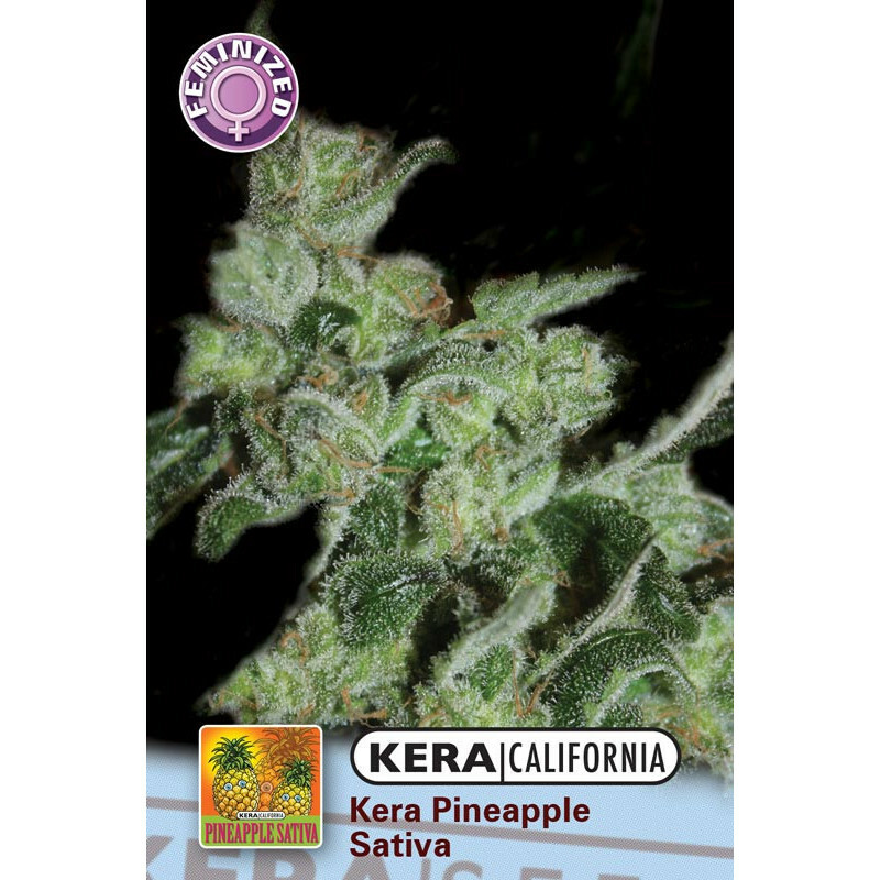 Kera California Pineapple Sativa 10 Pcs (Fem)