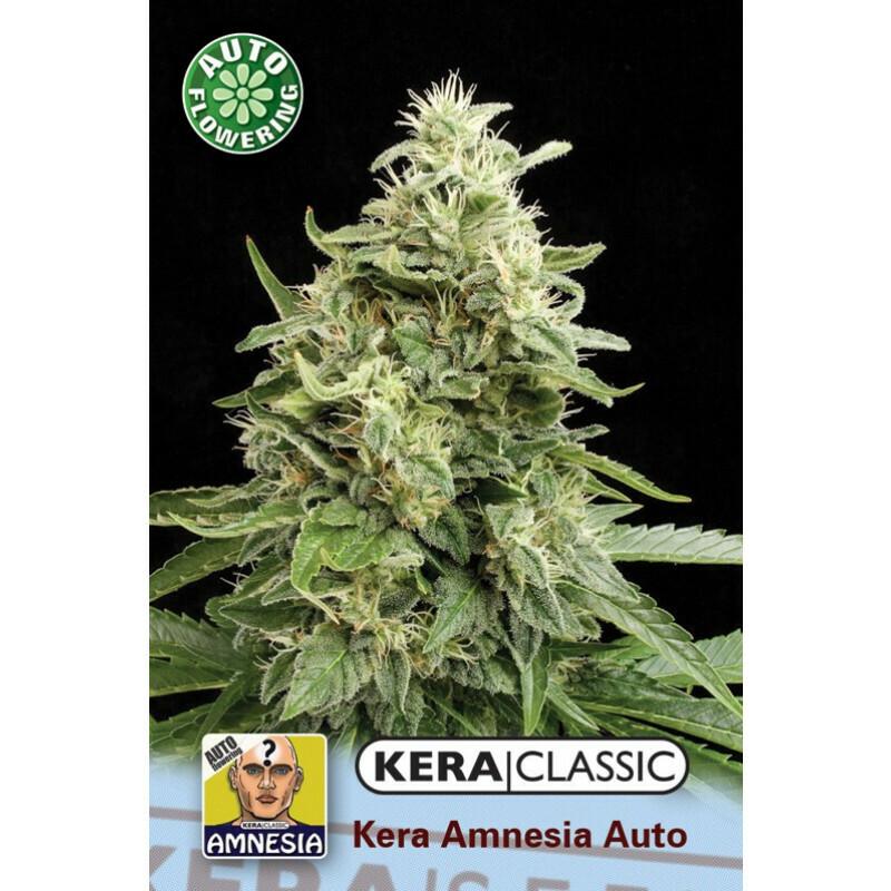 Kera Seeds Amnesia 10 Pcs (Auto)