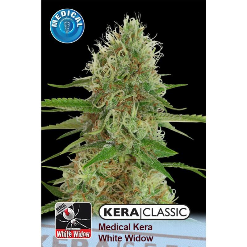 Kera Seeds Medical White Widow 3 Pcs (Fem)