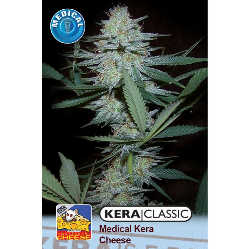 Kera Seeds Medical Cheese 5 Pcs (Fem)