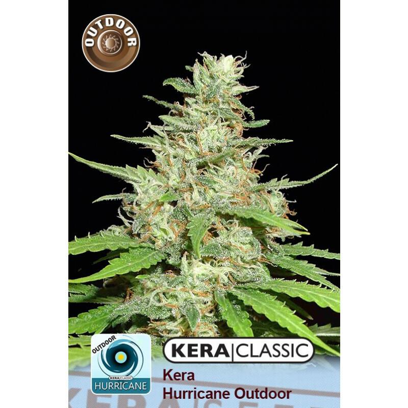 Kera Seeds Hurricane Outdoor 10 Pcs (Fem)