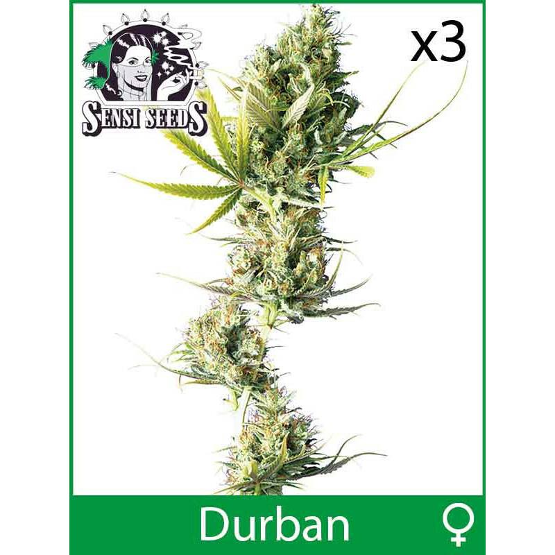 Sensi Seeds Durban (Fem) (3 Pcs)