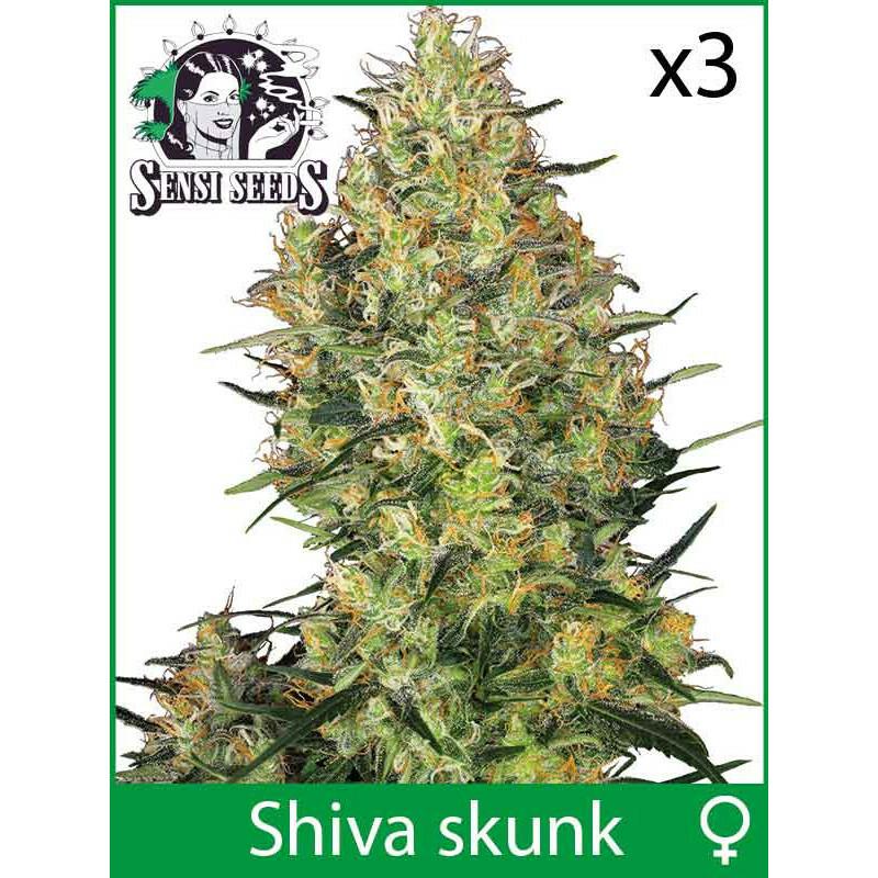 Sensi Seeds Shiva Skunk (Fem) (3 Pcs)