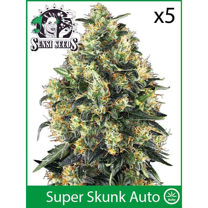 Sensi Seeds Super Skunk (Auto) (5 Pcs)