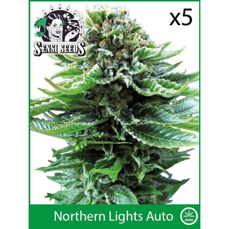 Sensi Seeds Northern Lights (Auto) (5 Pcs)