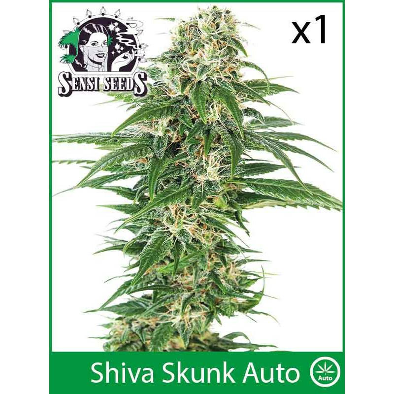 Sensi Seeds Shiva Skunk (Auto) (1 Pcs)