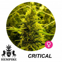Hempire Seeds Critical 5 Pcs (Fem)