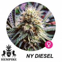 Hempire Seeds NY Diesel 5 Pcs (Fem)