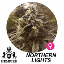 Hempire Seeds Northern Lights 5 Pcs (Fem)