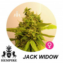 Hempire Seeds Jack Widow 5 Pcs (Fem)