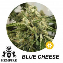 Hempire Seeds Blue Cheese 5 Pcs (Auto)