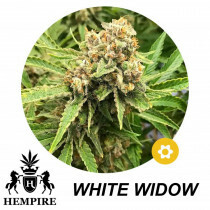 Hempire Seeds White Widow 5 Pcs (Auto)