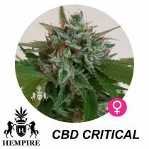Hempire Seeds Cbd Critical 5%Thc - 5%Cbd 5 Pcs (Fem)