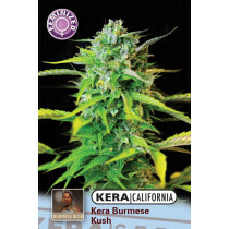 Kera California Burmese Kush 1 Pc (Fem)
