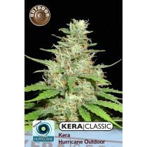 Kera Seeds Hurricane Outdoor 3 Pcs (Fem)