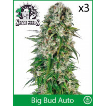 Sensi Seeds Big Bud (Auto) (3 Pcs)