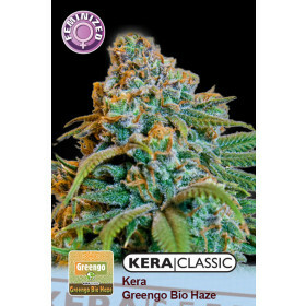 Kera Seeds Greengo Bio Haze 10 Pcs (Fem)