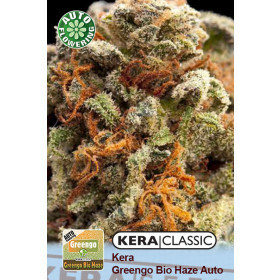 Kera Seeds Greengo Bio Haze 10 Pcs (Auto)